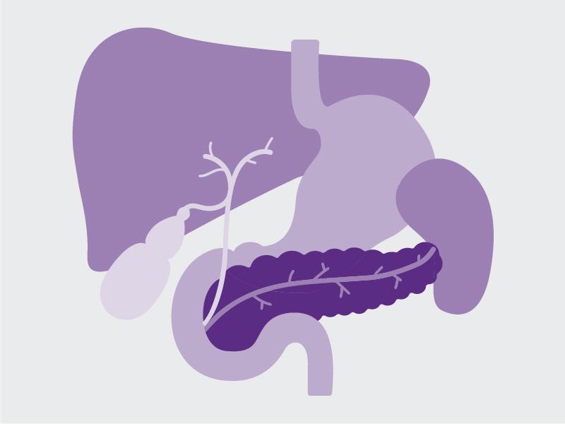 Organ Pankreas